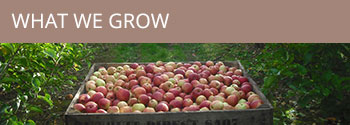 See the different fruit we currently grow on the farm.